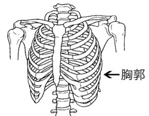 胸郭をしっかり利用して呼吸の質をUP! | さつま骨格矯正鍼灸整骨院