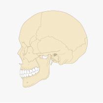 全身頭蓋矯正と小顔矯正3Dデザイン