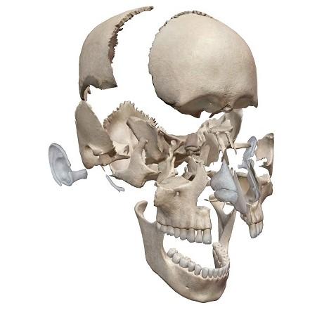 矯正 頭蓋骨